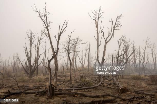 North America, USA, American, Southwest, Colorado Plateau, Colorado, Mesa Verde National Park, burned forest.