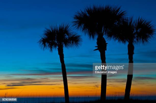 North America, USA, Florida, Sarasota, Crescent Beach, Siesta Key, Sunset and Palm Trees.