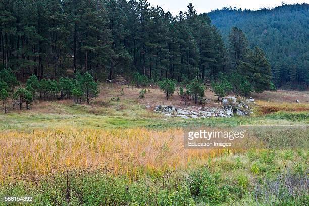 North America USA South Dakota Black Hills Custer Custer State Park Scenic Fall Landscape