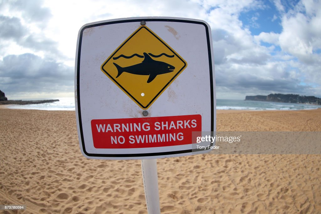 Avoca Beach Closes Following Shark Attack : News Photo