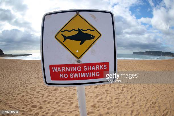 North Avoca Beach is closed after a surfer was attacked by a shark on November 13 2017 in Gosford Australia