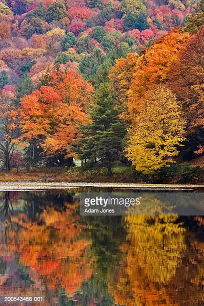 USA, North Carolina, Bass Lake and autumnal foliage