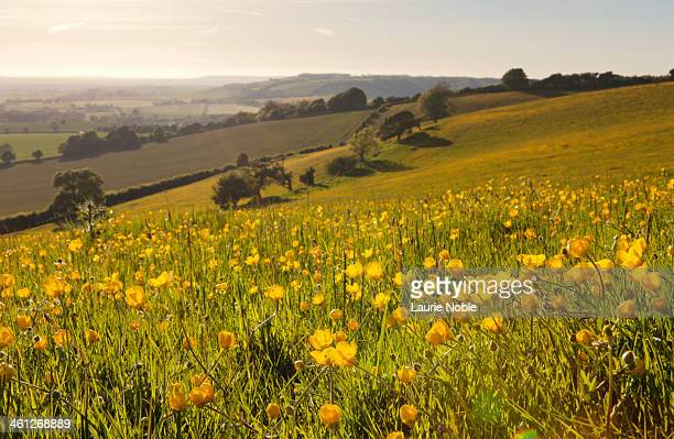 north downs, kent, england - kent england stock pictures, royalty-free photos & images