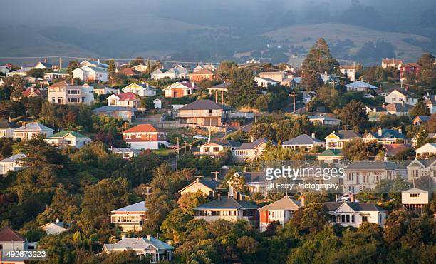 North Dunedin houses on a hillside in the evening