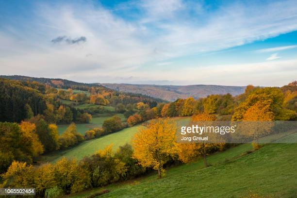 north eifel in autumn - north rhine westphalia stock pictures, royalty-free photos & images