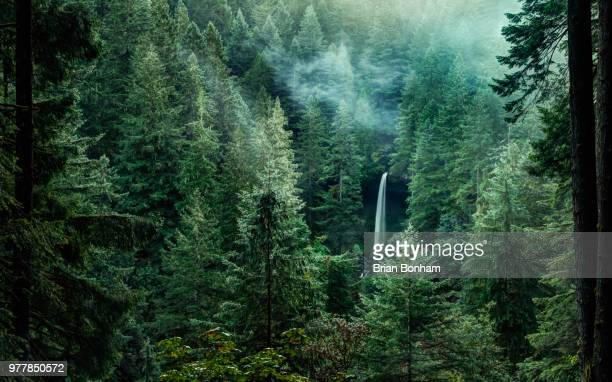 north falls in silver falls state park, oregon, usa - national park stock pictures, royalty-free photos & images