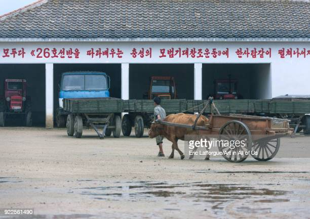 North Korean farmer with his ox cart going back to the farm South Hamgyong Province Hamhung North Korea on September 15 2011 in Hamhung North Korea