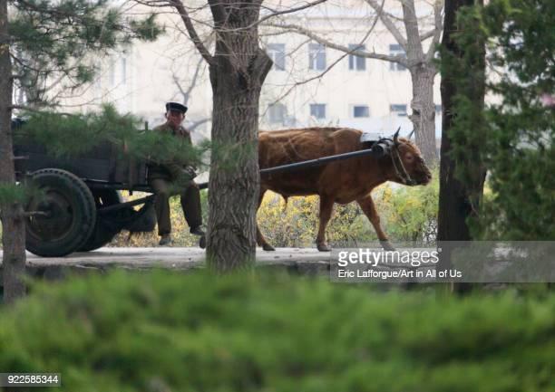 North Korean farmer with his ox cart North Hwanghae Province Kaesong North Korea on April 28 2010 in Kaesong North Korea