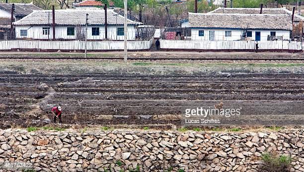 North Korean farmers plow a field by hand without any machine help as seen from Tumen Jilin province China on May 10 2009 These rare photos show bits...