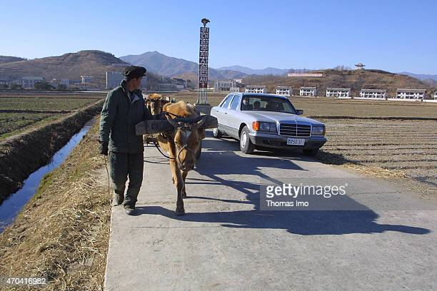 North Korean farmers with ox carts next to a Mercedes of the North Korean government on December 07 2001 in Chonsamri North Korea Photo by Thomas...