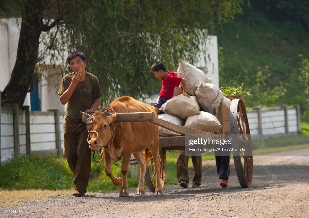 North Korean farmers with their ox cart on the road, North Hwanghae Province, Sariwon, North Korea... : News Photo
