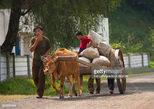 North Korean farmers with their ox cart on the road North Hwanghae Province Sariwon North Korea on September 10 2008 in Sariwon North Korea