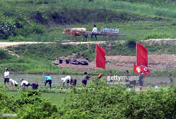 North Korean farmers work on the north side of the demilitarized zone dividing North and South Korea near the border village of Panmunjom 28 May 2005...