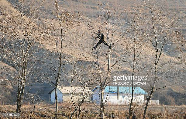 A North Korean soldier climbs trees on the banks of the Yalu River some 70 kms north of the North Korean border town of Siniuju which lies across the...