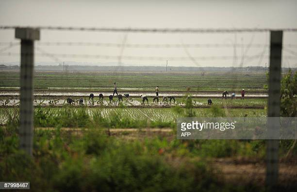North Koreans work in a field behind a barbed wire fence which separates China and North Korea on the outskirts of Dandong in northeast China's...