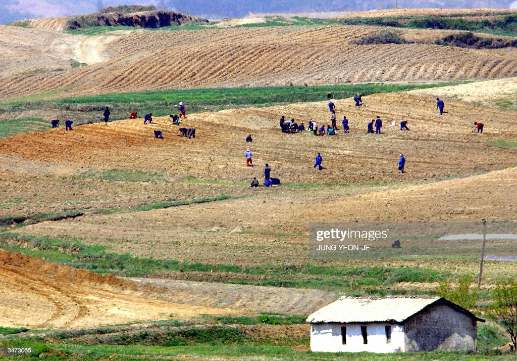 North Koreans work the field of Kijong-d : News Photo