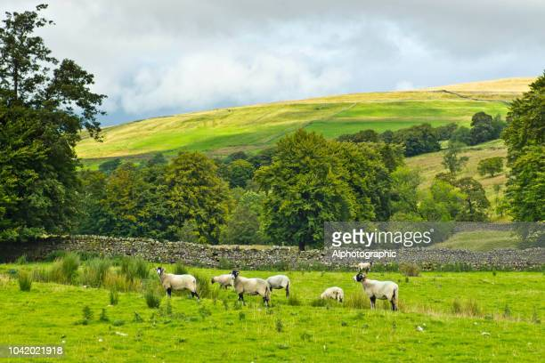 north pennines - cumbria stock pictures, royalty-free photos & images