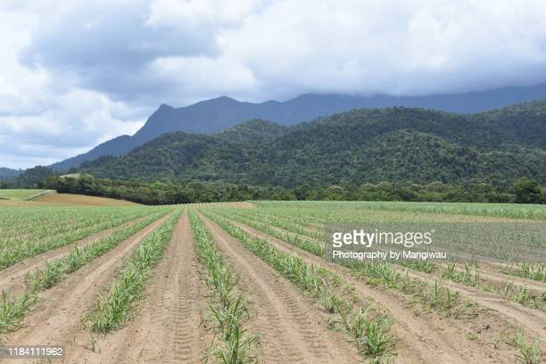 north queensland canefields - townsville queensland stock pictures, royalty-free photos & images
