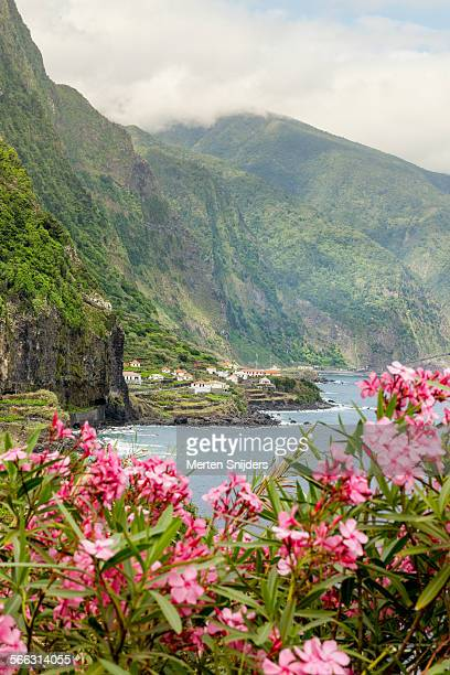 North shore coast and pink flowers