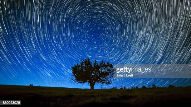 north star centered above juniper tree night sky star trails over oregon - north star stock pictures, royalty-free photos & images