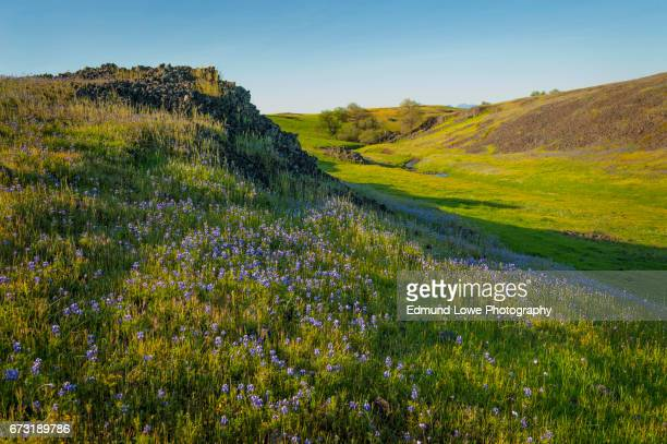 north table mountain ecological reserve, oroville, california - sacramento stock pictures, royalty-free photos & images