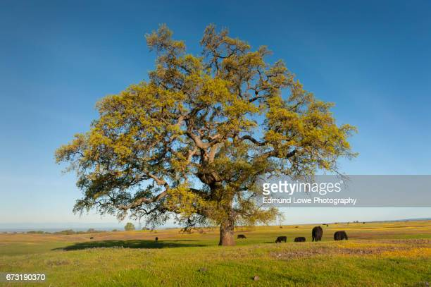 North Table Mountain Ecological Reserve, Oroville, California