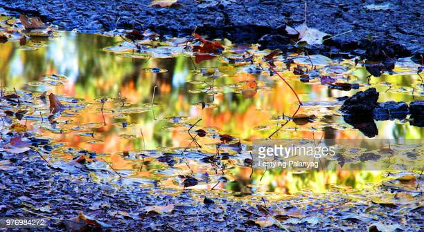 north wood county park, wisconsin - staadts,_wisconsin stock pictures, royalty-free photos & images