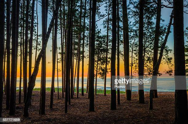north woods - upper peninsula stock pictures, royalty-free photos & images