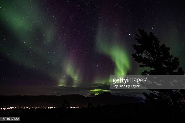 northen lights, in tromso, cold night - marginata stock pictures, royalty-free photos & images