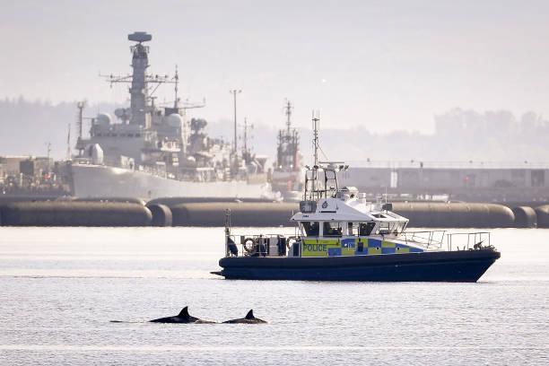 GBR: Whales Stuck In Shallow Water Near Faslane Naval Base