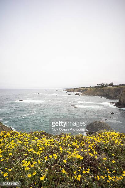 northern california coast - stoking stock pictures, royalty-free photos & images