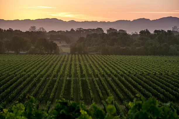 California Prepares For 2014 Grape Harvest
