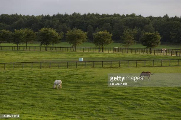 Northern Farm Kuko in Hokkaido Japan on August 21 2017 Northern Farm Kuko handles racehorse breeding raising and training