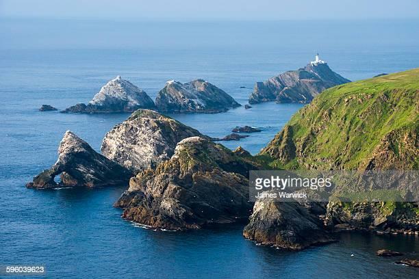northern gannet breeding colonies on rocky islands - isole shetland foto e immagini stock