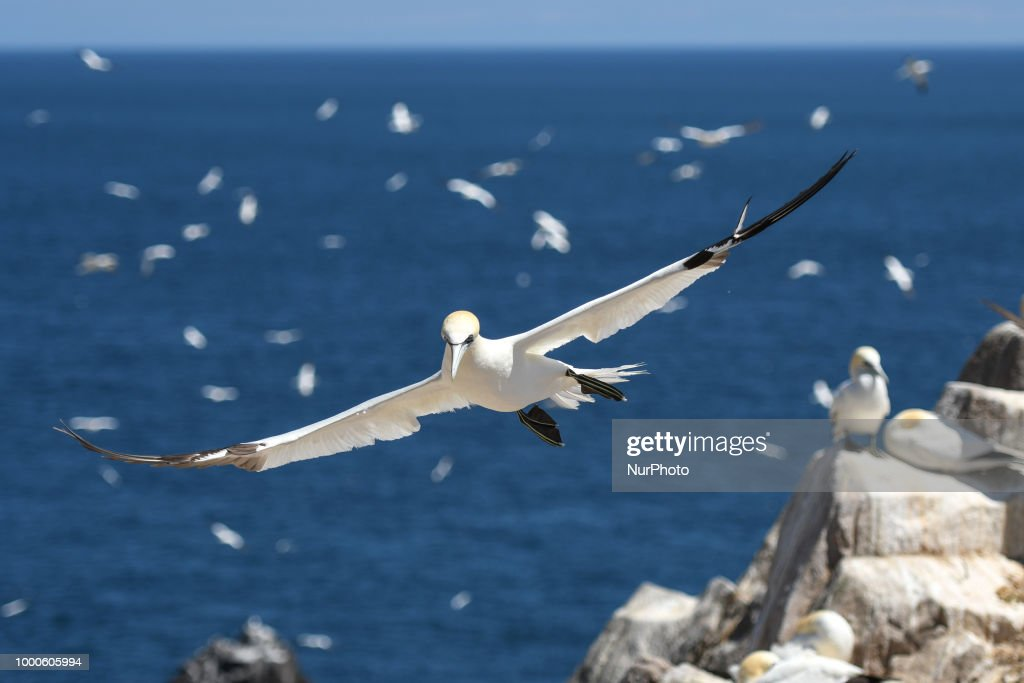 The Saltee Islands - the Most Famous Bird Sanctuary in Ireland : News Photo