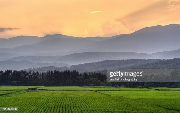 northern harvest sunset - 八幡平市 ストックフォトと画像