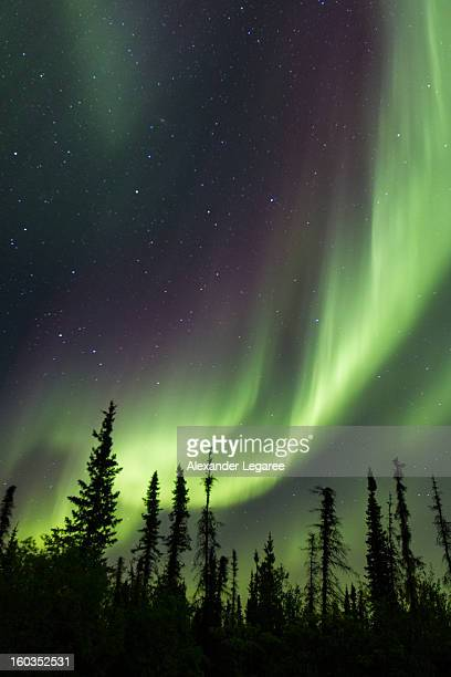 Northern lights dancing above the sky in Canada's Northwest Territories.