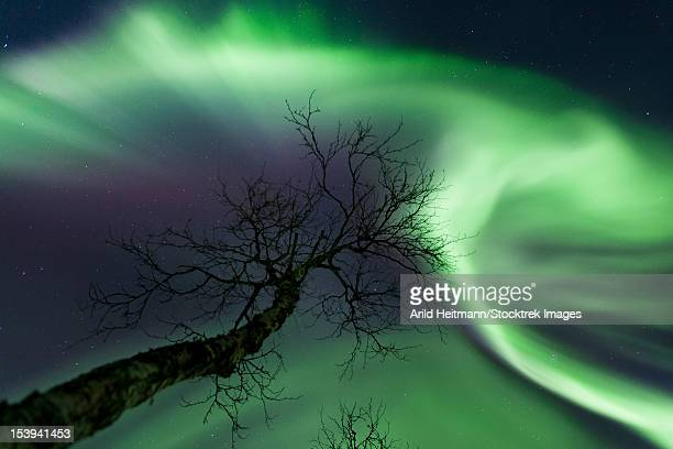 Northern Lights in the arctic wilderness, Nordland, Norway.