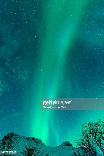 "northern lights in the night sky over the lofoten norway - ""sjoerd van der wal"" stockfoto's en -beelden"