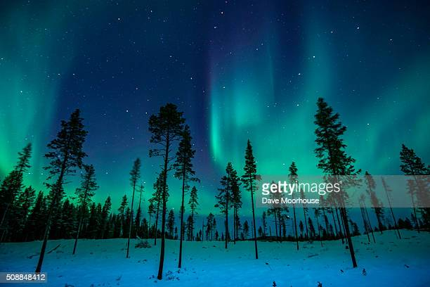 northern lights in the trees - swedish lapland stock photos and pictures