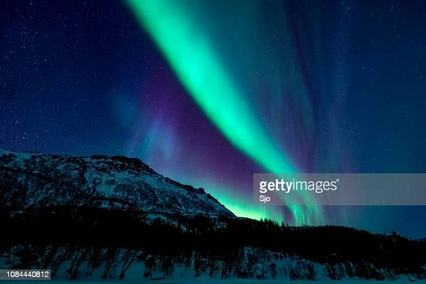 northern lights or aurora borealis in lofoten islands, norway. polar lights in a starry sky over a snowy winter landscape - aurora polaris stock pictures, royalty-free photos & images
