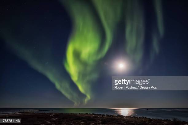 northern lights over hudson bay - hudson bay stock photos and pictures