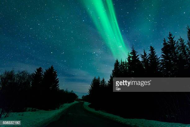 Northern Lights over pine trees in Norway during winter