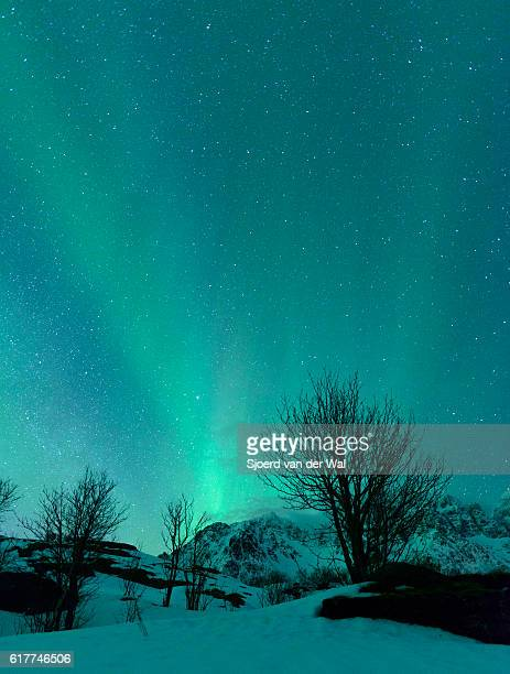 "northern lights over the lofoten islands in norway - ""sjoerd van der wal"" stock pictures, royalty-free photos & images"