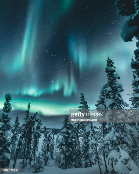 northern lights over winter forest, yellowknife, northwest territories, canada - yellowknife canada stock pictures, royalty-free photos & images