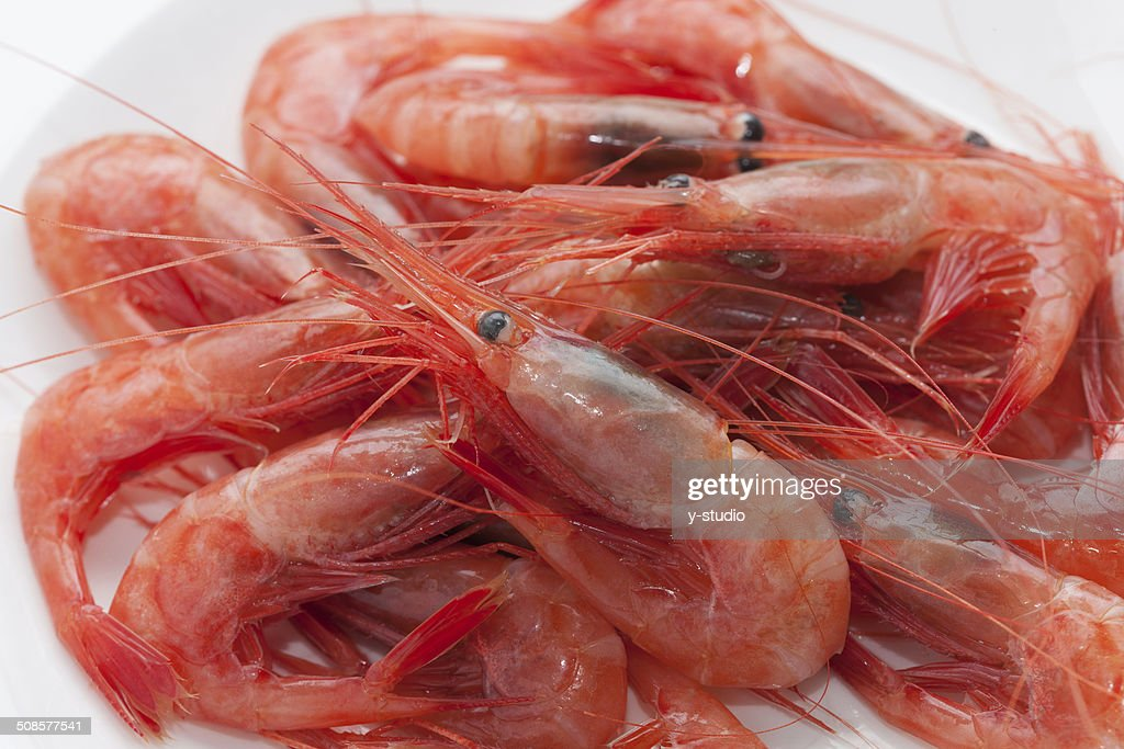 Northern crevettes raw des sashimis. : Photo