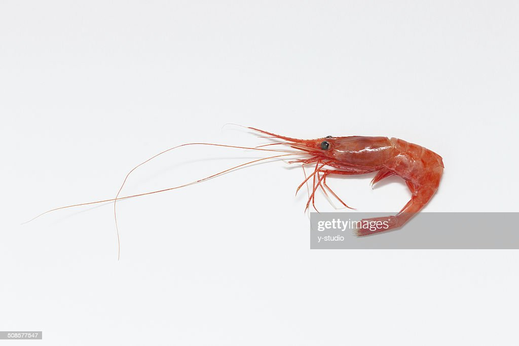 Northern shrimp : Bildbanksbilder