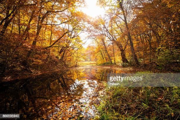 Northern Woodland