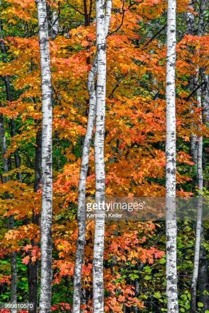 northwood - autumn in wisconsin - iowa_county,_wisconsin stock pictures, royalty-free photos & images