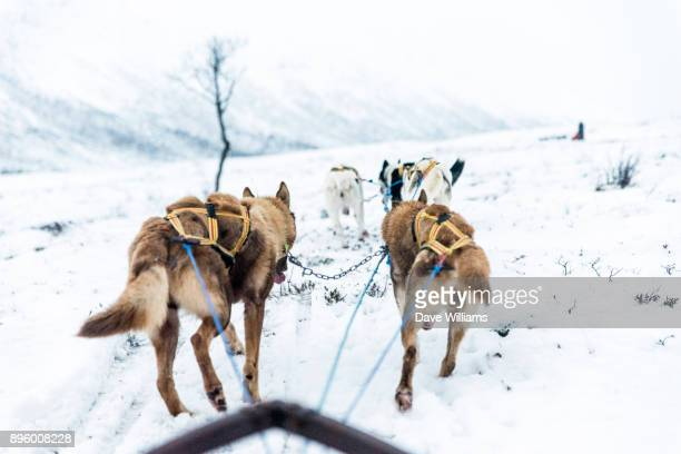 Norway Dog Sled